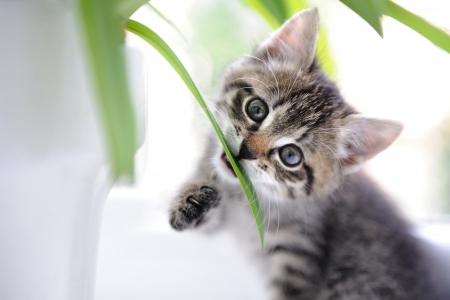 Gato que juega con las hojas