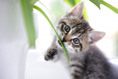 Cat playing with leaves