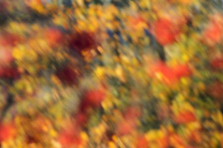 Autumn colors - bokeh background, texture