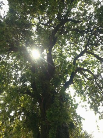 oxigen: Under the tree