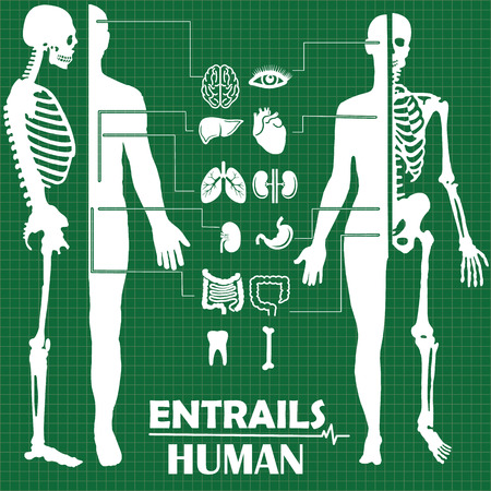 White icon anatomical organs and bones on a green background.. In vector format