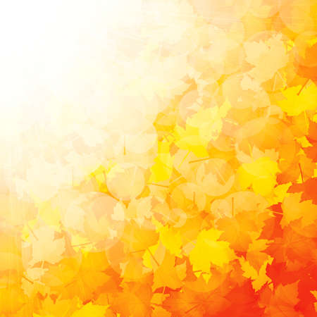 Autumnal leaf of maple and sunlight Stock Vector - 10036790