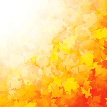 Herfst blad van esdoorn en zonlicht