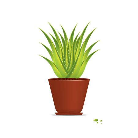 Aloe Vera plant in pot isolated on white Stock Vector - 14368122