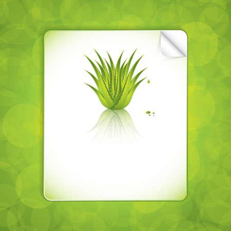 Aloe Vera concept design vector Vector