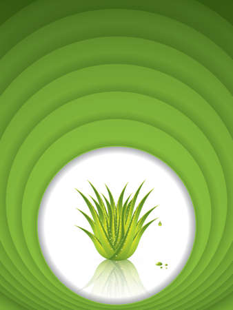 vera: Aloe Vera concept design.Vector Illustration