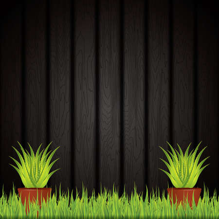 aloe vera plant: Aloe Vera plant in pot.Vector