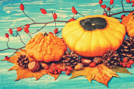Autumn background with pumpkins, acorns, pine cones, berries, chestnuts and leaves on rustic blue wooden background (selective focus).