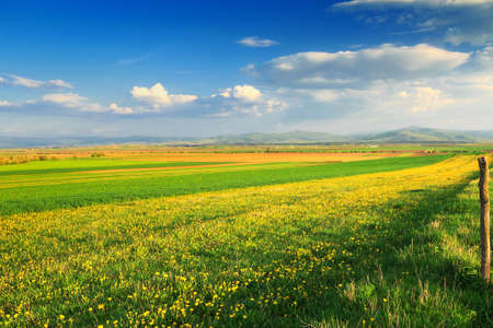 Beautiful landscape with yellow dandelions under blue sky with clouds.Transylvania,Romania,Europe.