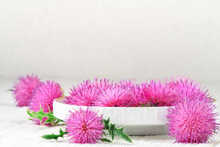 Silybum marianum (milk thistle) herb in a bowl.One of the most common uses of milk thistle is to treat liver problems.Alternative medicine concept on a white wooden table (selective focus). Stockfoto