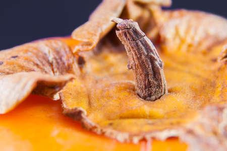 over a fruit of khaki. Macro image of a peduncle of Khaki Imagens
