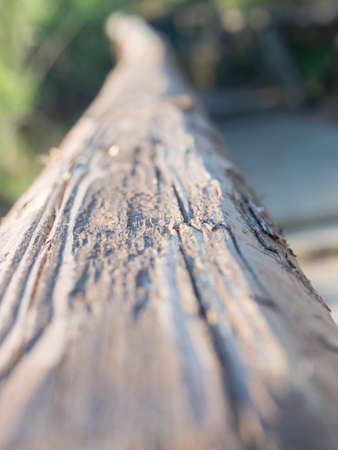 Close up image of a log of wood. Example of photographic technique to exemplify the depth of field