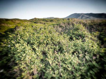 scrub grass: Mediterranean scrub leafs sky. Typical vegetation in Sardinia Stock Photo