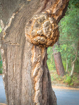 petrified: petrified forest haunted, tree with scared expression .