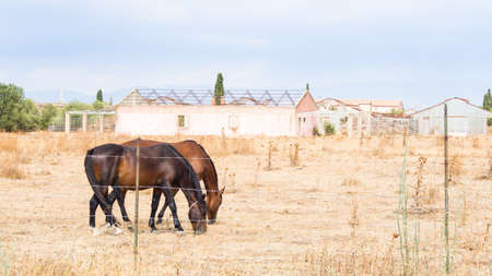 abandonment: horses greenhouses agriculture. concept of abandonment of agriculture as a productive sector. horses grazing