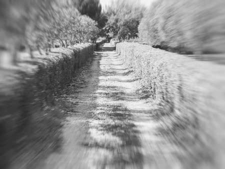 without: avenue infinite with hedges. Driveway without end. Concept of travel without end