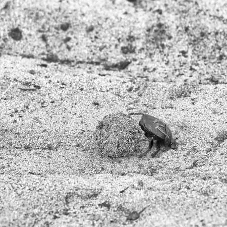 tenacity: Dung beetle pushes his ball in a steep climb. concept of tenacity and willpower