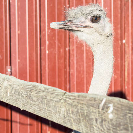 expected: curious ostrich expected. Ostrich wait for someone.