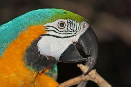 polly: bird