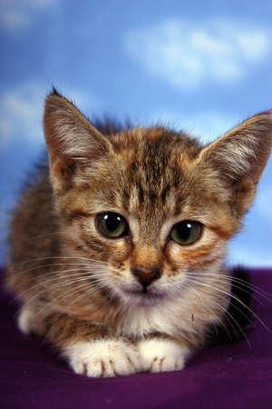 meow: Meow Stock Photo