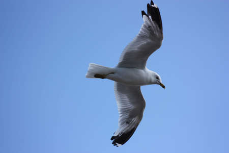 seagull Stock fotó