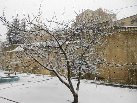 sur: arbre sur la neige
