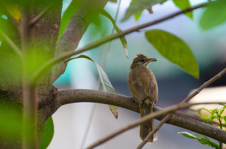 The bird on a tree branch, soft focus, selective focus. Stock Photo
