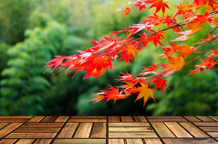 empty modern wooden terrace with blurred view red maple leaves with nature green forest in autumn background, copy space for display of product or object presentation