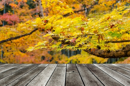 empty modern wooden terrace with blurred view yellow maple leaves with nature forest in autumn background, copy space for display of product or object presentation Stock Photo
