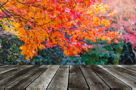 empty modern gray color wooden terrace with blurred view red maple leaves with nature green forest in autumn background, copy space for display of product or object presentation