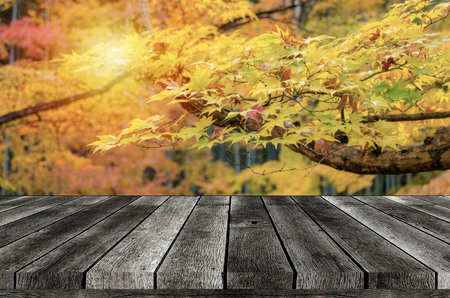 empty wooden board, table or modern wooden terrace with view yellow maple leaves with nature forest in autumn background, copy space for display of product, object presentation, advertising concept