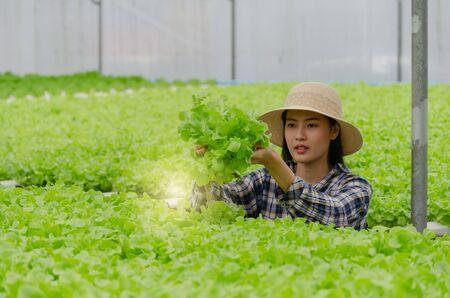 young asian woman farmer checking fresh green oak lettuce salad, organic hydroponic vegetable in greenhouse garden nursery farm, agriculture business, organic vegetable farm and healthy food concept