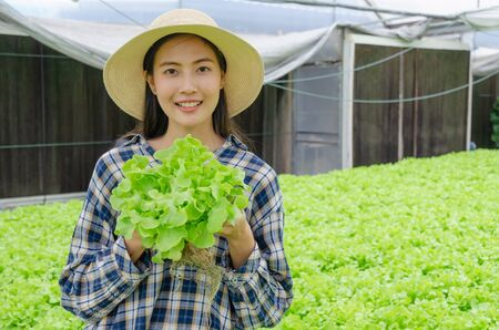 asian young friendly woman farmer smiling and holding fresh green oak lettuce salad, organic hydroponic fresh green vegetables produce in greenhouse garden nursery farm, agriculture business concept 版權商用圖片 - 146970264