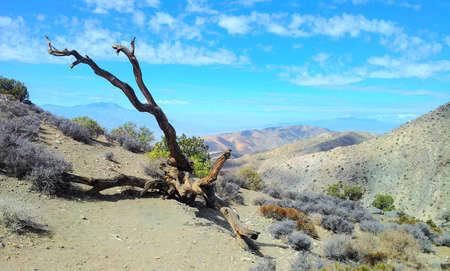 western united states: United States Western desert