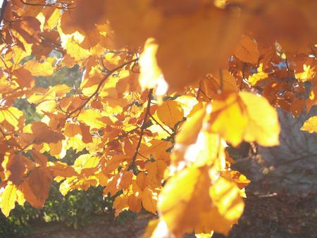 albero: foglie gialle
