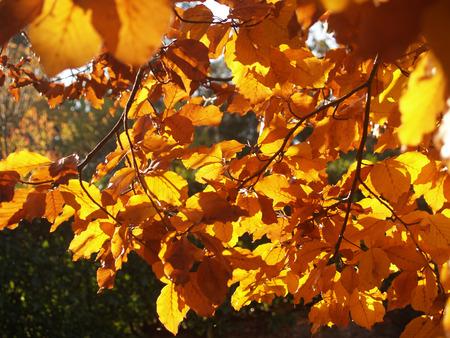 albero: foglie rosse