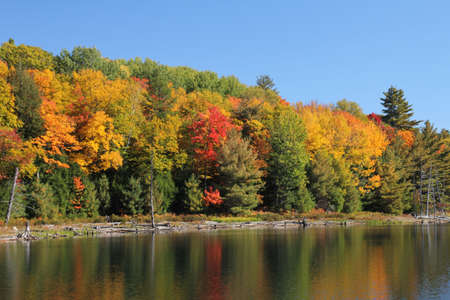 red maples: Bright coloured autumn trees reflecting on calm lake, Ontario, Canada