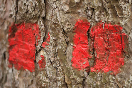 Red trail indicator painted on tree photo