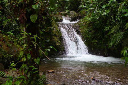 Small waterfall in cloud forest in Mindo, Ecuador  photo