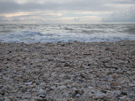 Barefoot Beach State Preserve in Florida, a land tortoise sanctuary Standard-Bild