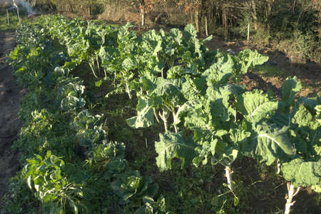 Small field full of vegetables, beets, leeks, broccoli, cabbage, in organic farm