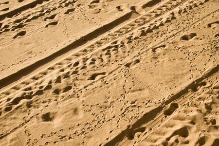 vogelspuren: LKW-Vogel und der Mensch die Spuren auf Sand sonnenbeschienenen