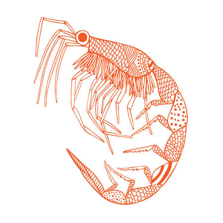 Orange shrimp Illustration