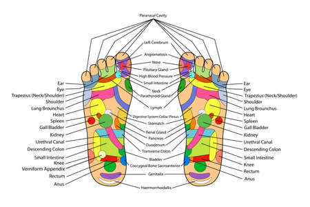 reflexologie plantaire: Alternatif traditionnel gu�rir, Acupuncture - R�gime pied