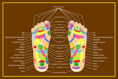 Traditional alternative heal, Acupuncture - Foot Scheme Vector