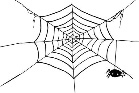 spider web background: Hand Draw sketch, spider and web Stock Photo