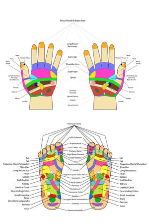 reflexology: Traditional alternative heal, Acupuncture - Foot and hand Scheme Stock Photo