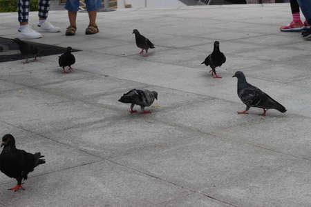 copulate: Get Spliced Bird a