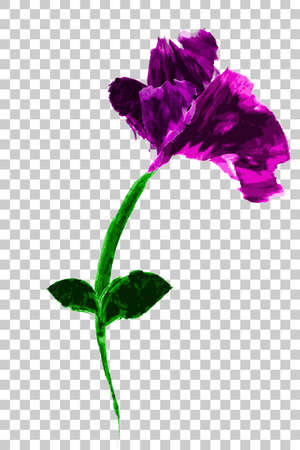 Water color, Rose Purple Flower, at Transparent Effect Background