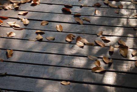 dode bladeren: Brug en dode bladeren Stockfoto